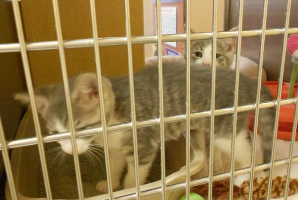 Kittens0719.3