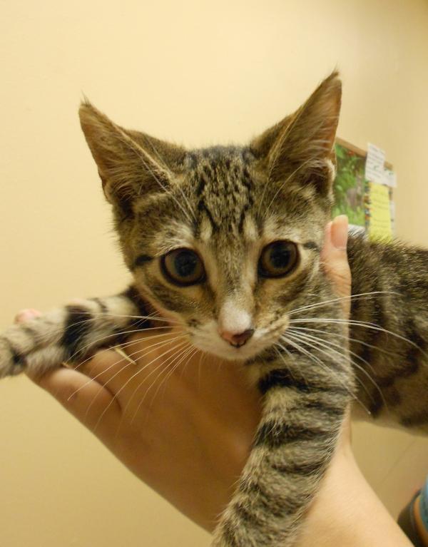 Kittens0613.1