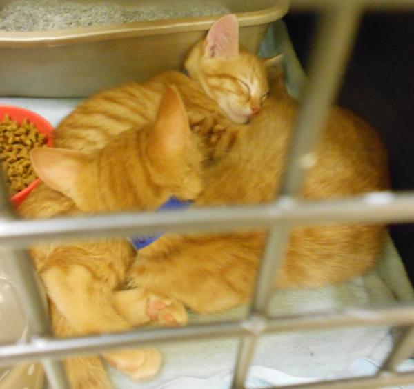 Kittens0514.25