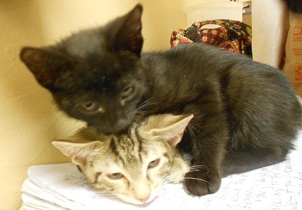 Kittens0604.5