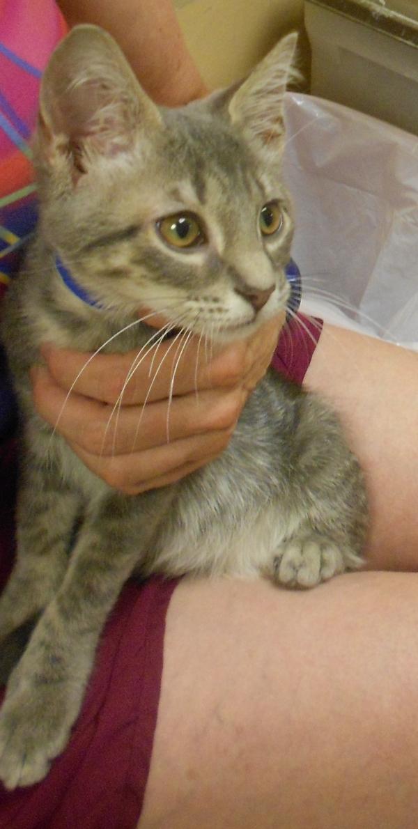 Kittens0709.12
